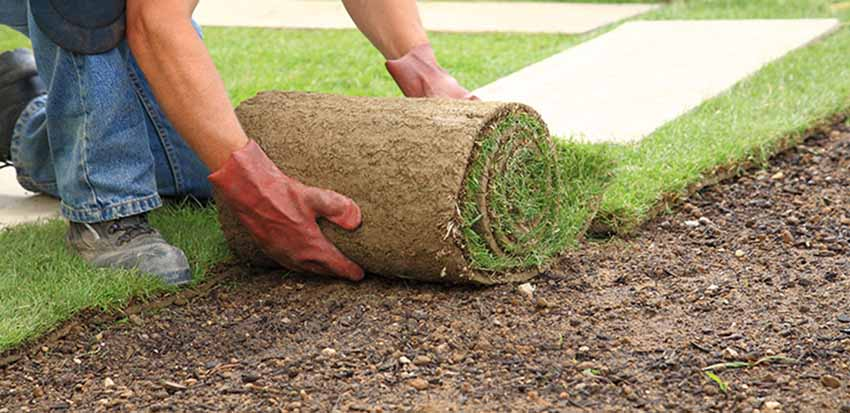 Sod for Your Yard