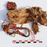 Guinea Pig Buried by Inca Tribe As Sacrifice to Gods