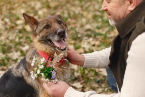 Treatments and Remedies for Canine Aggressiveness