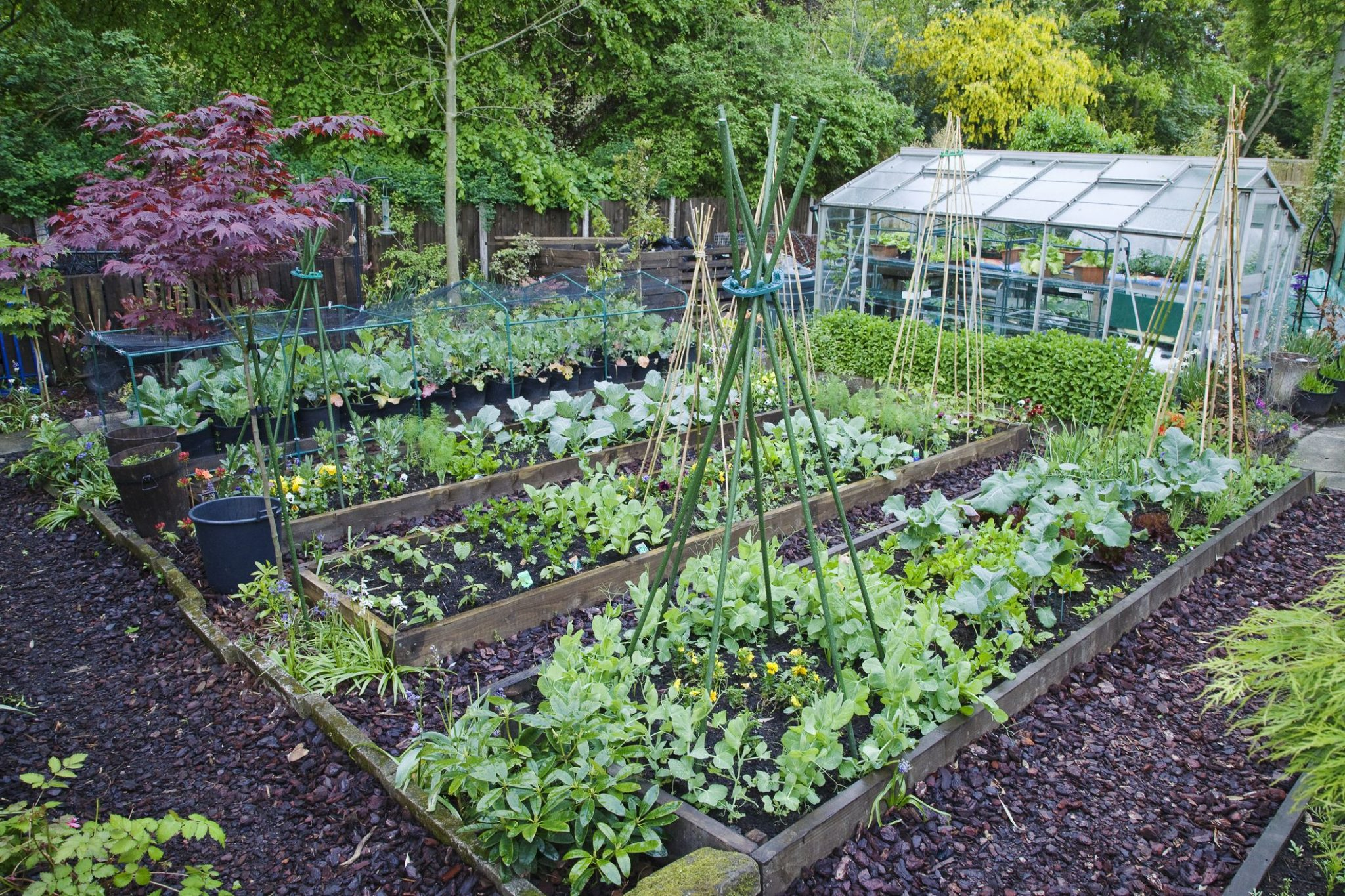 Best Seeds to Grow Your Own Garden