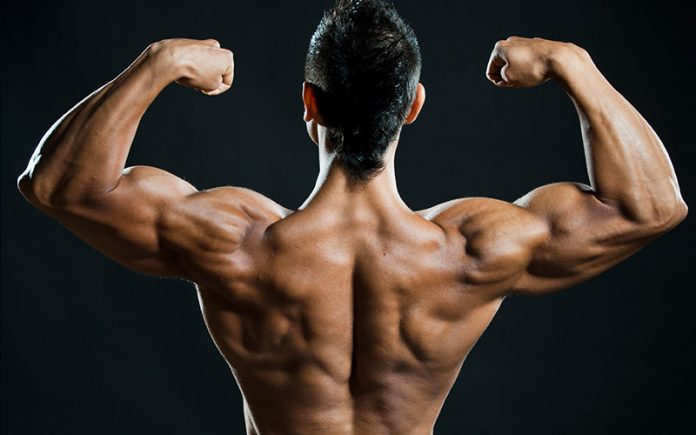 build bigger shoulders with dumbbells
