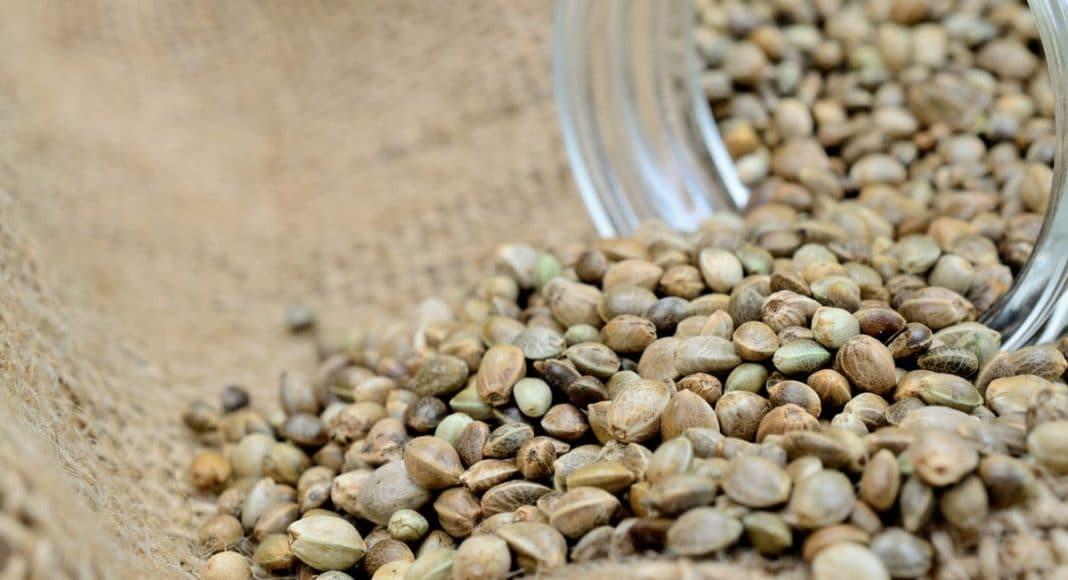 Medical Health Benefits of Chronic Seeds