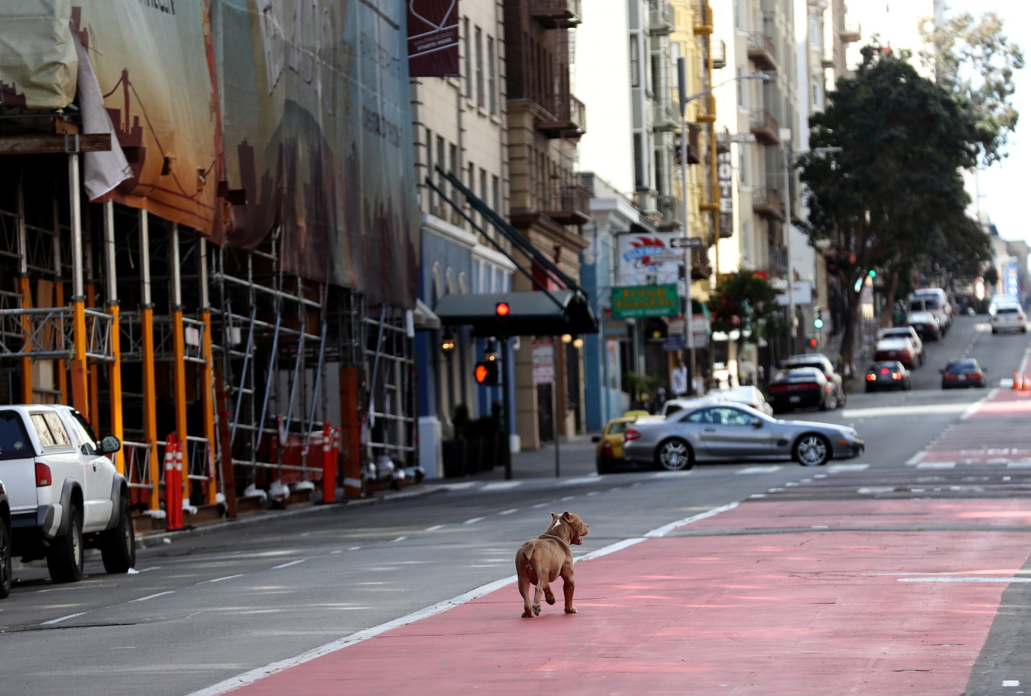 san francisco shelter in place