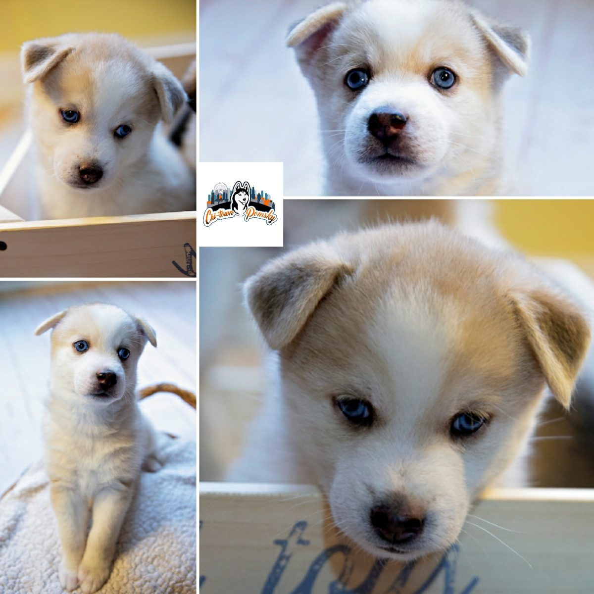cheap puppies for sale near me